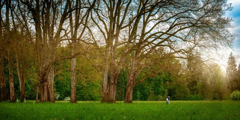 Zelený park.